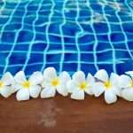 plunge pool gold coast with frangipani flowers