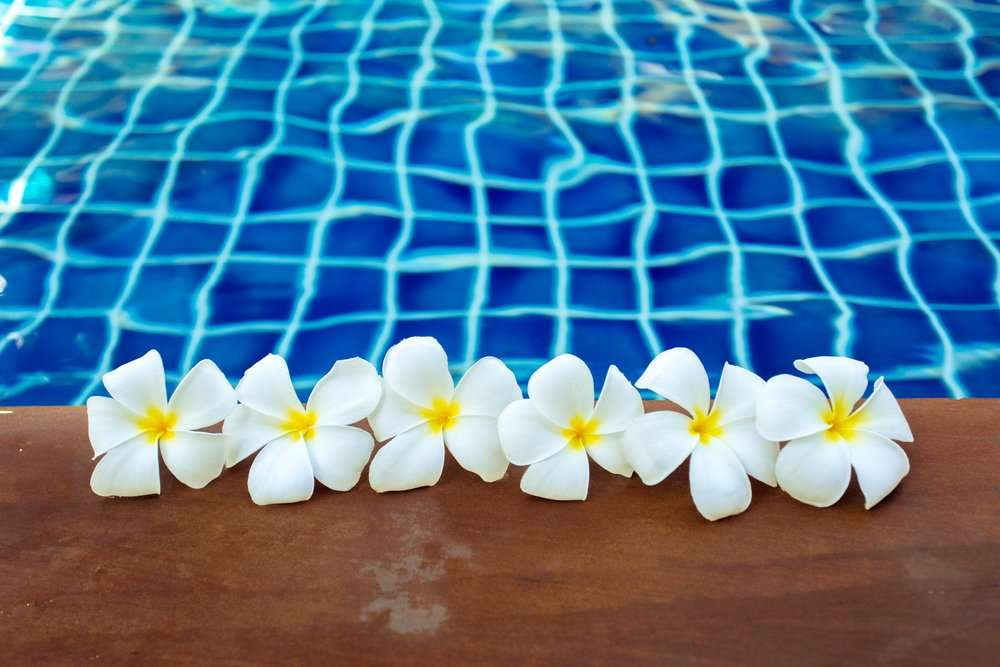 plunge pool gold coast with frangipani flowers
